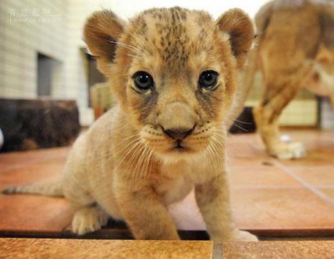 动物小了才可爱!超级萌的小动物