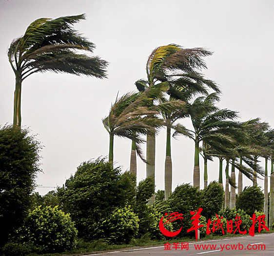 台风 启德 刮走广东20亿 天秤 或来袭