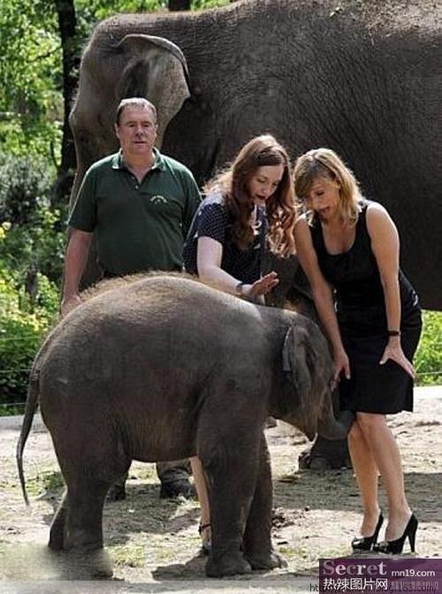 盘点全球搞笑动物照片:大象最疯狂【组图】