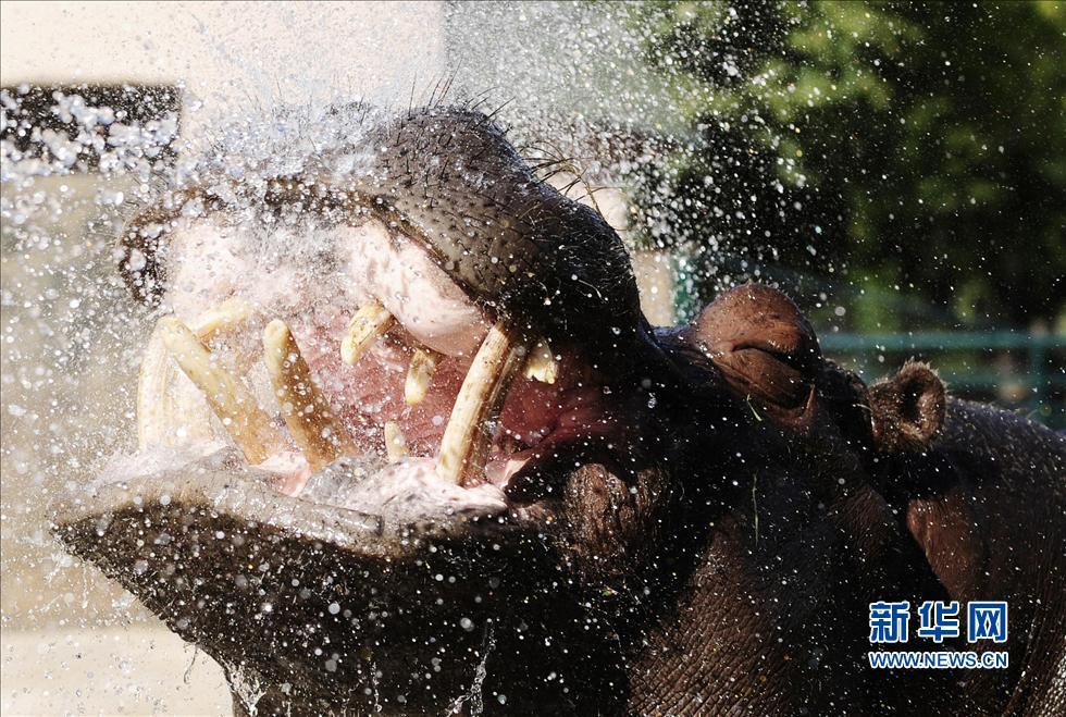 个人夏日趣图:动物很热,一起来冲个凉吧!一图天气套性感美女图片