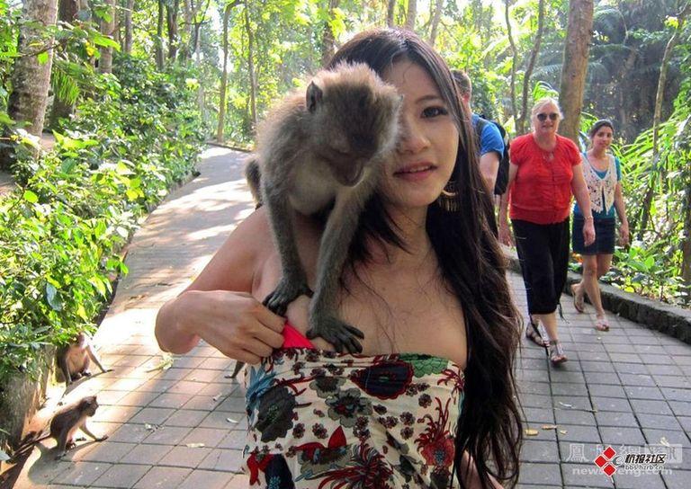 """美女遭猴子扒衣服""""非礼"""" 动物也好色?组图"""