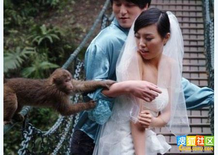 美女遭猴子扒衣服非礼