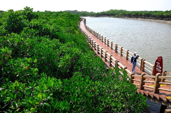 华南地区 海南 本网专稿  今年海口东寨港红树林景区的迅速走红可以图片