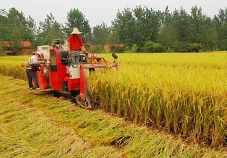 潢川县传流店乡经坊寺村水稻高产示范区正在机收水稻