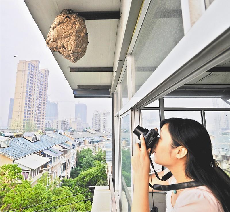 屋檐视宠物下马蜂为邻居天天拍照市民心惊胆战表情v屋檐物理包图片