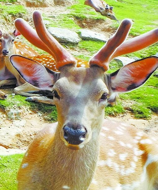 厦门动物园一黇鹿死亡 胃中发现8斤塑料袋(图)