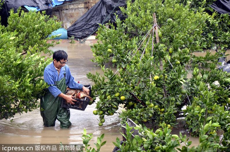 寿阳松塔镇:小土豆趟出致富路[2]