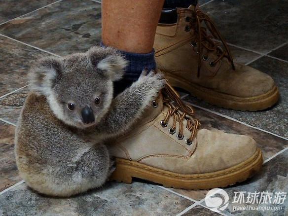 欣赏世界上最可爱的动物[2]- 中国在线