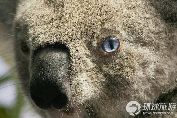 欣赏世界上最可爱的动物[4]- 中国在线