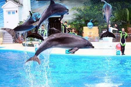 中国最大规模极地海洋动物馆开馆