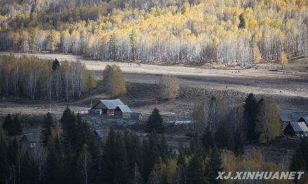 这是9月25日拍摄的新疆阿勒泰喀纳斯景区禾木村的金秋美景.