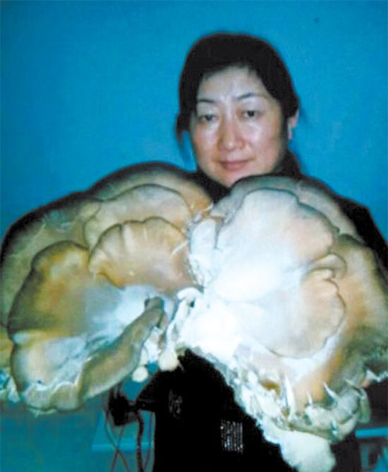 ...杨树根部发现巨型野生蘑菇,其中有一大朵蘑菇长在树桩中间,经... 图片 41k 550x670