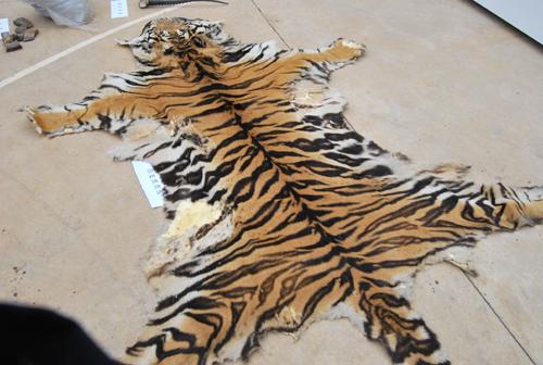 被缴获的野生动物制品将集中销毁.