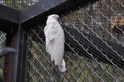 老鼠猖獗咬断鹦鹉腿 云南野生动物园求灭鼠良方