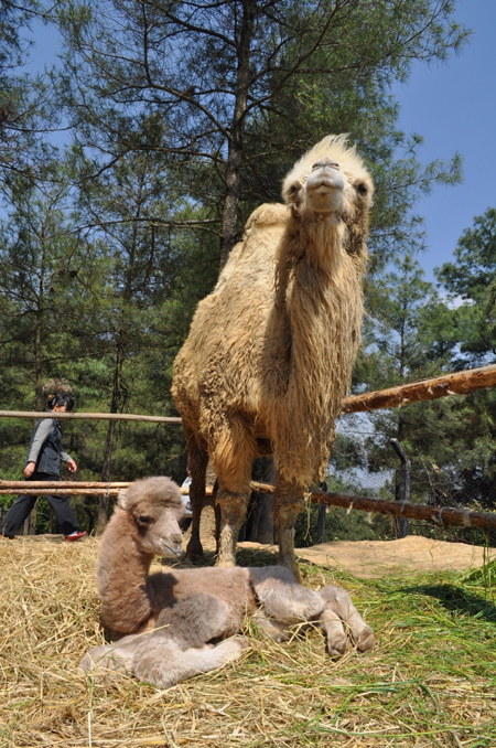 云南野生动物园可认养新生小动物