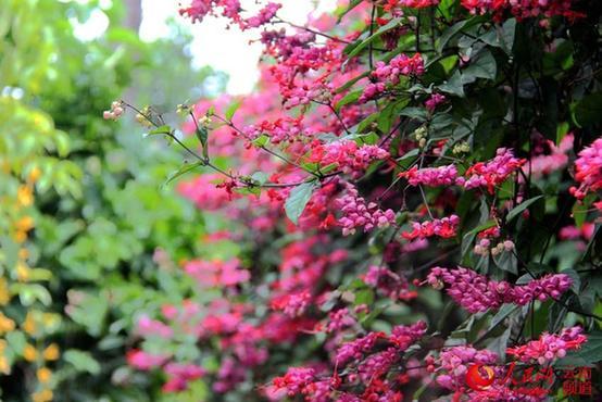 据资料显示,中科院西双版纳植物园位于勐腊县勐仑镇,距景洪市96