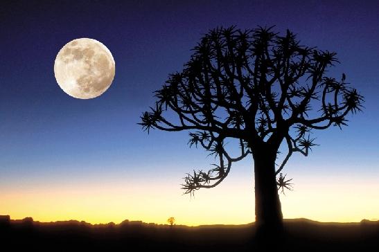七律·月亮 - 雨林 - 雨 林 诗 草