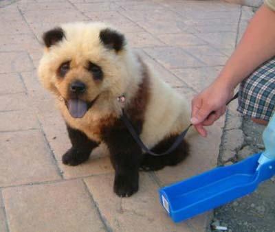 The Panda Dog Xin_14110115140374124581