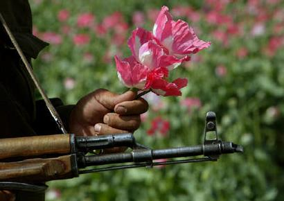 Un opium farming slows in afghanistan a police official holds poppy flowers in his hands while keeping guard over others who were mightylinksfo