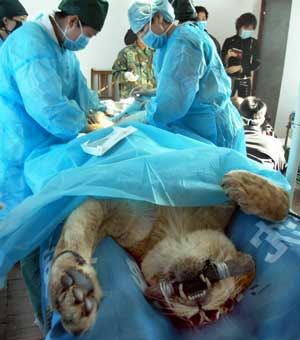 Image result for caesarean operation