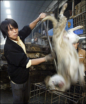 French animal lovers howl at Chinese dog slaughter - photo#36