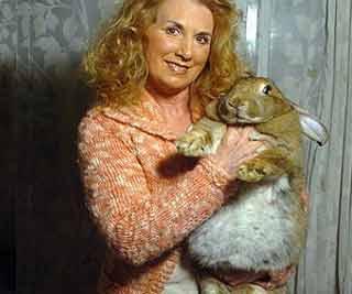 giant rabbit aims record br 巨兔体重超3岁儿童