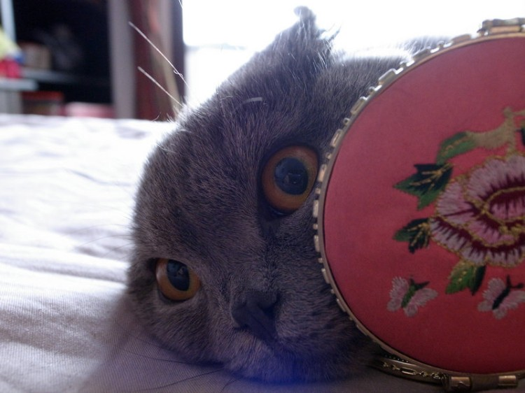 cui xiaofang's photography: lens on cats