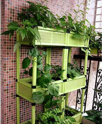 Balcony farmers are taking root organic life chinadaily for Balcony vegetable garden