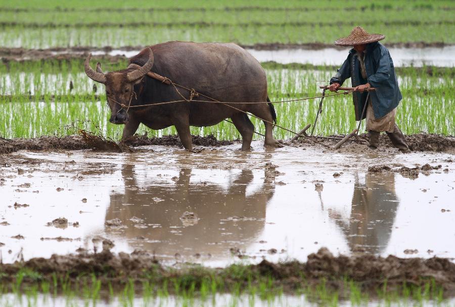 What Chinese tariffs mean to a geoduck clam farmer