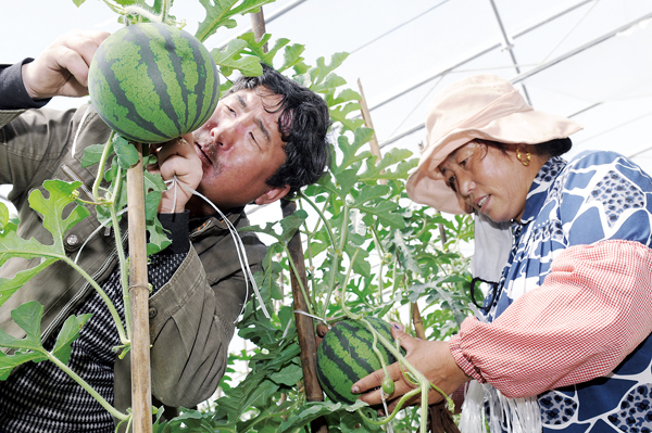 Green houses bring wealth to Tibetan farmers