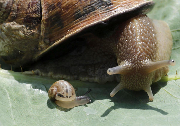 Snail farm in Vienna