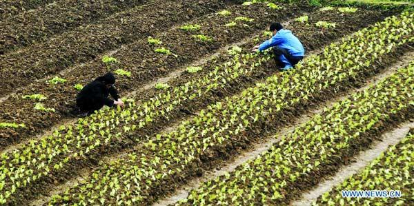 Farm work across China