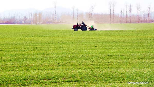 Farmers fertilize wheat as spring ploughing comes in Beijing