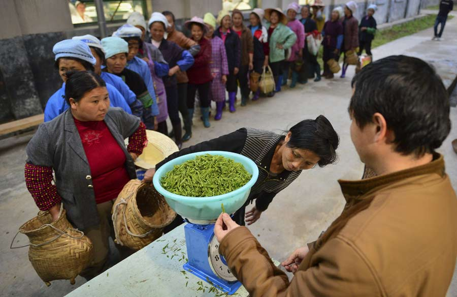 Young laborers shun tea harvesting