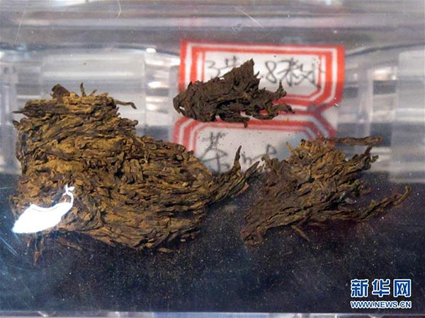 World's oldest tea on display in NW China