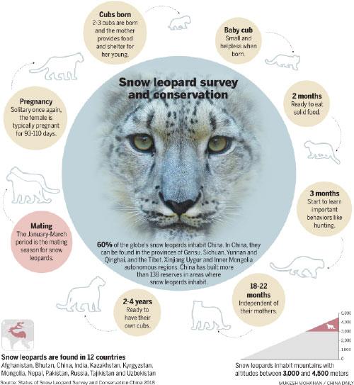 He quits high-paying job, turns snow leopard savior