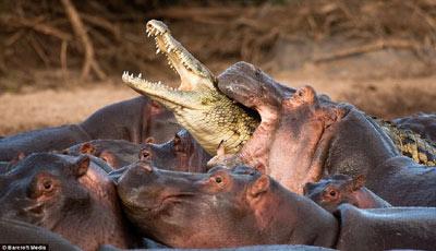 手工动物牙齿鳄鱼