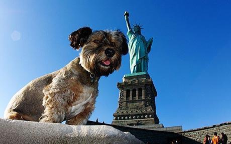 """一只名叫""""奥斯卡""""的小狗或许可以摘得动物王国中""""最勇敢探险家""""的称号"""