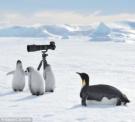 美国野生动物摄影师大卫舒尔茨在南极雪山岛附近抓拍