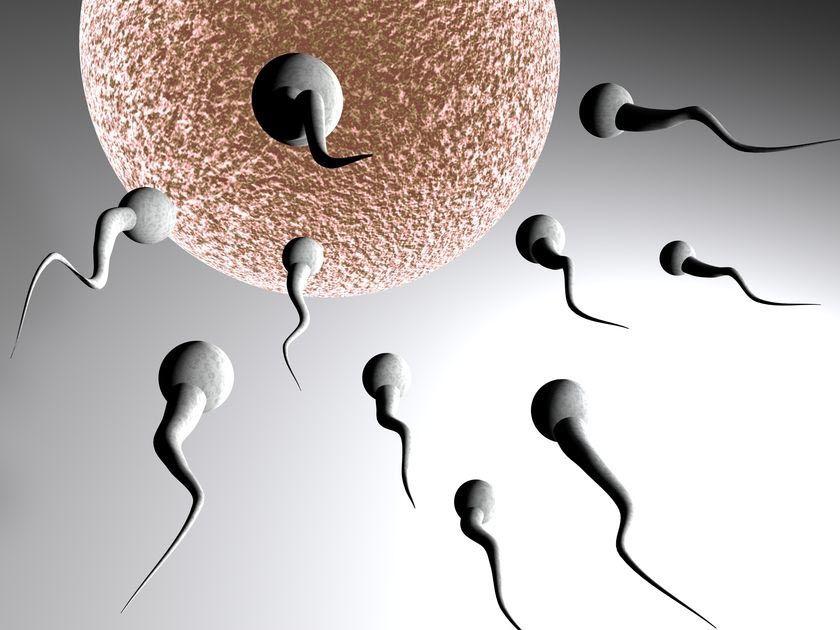 澳大利亚精子库告急 医院做广告呼吁男性慷慨