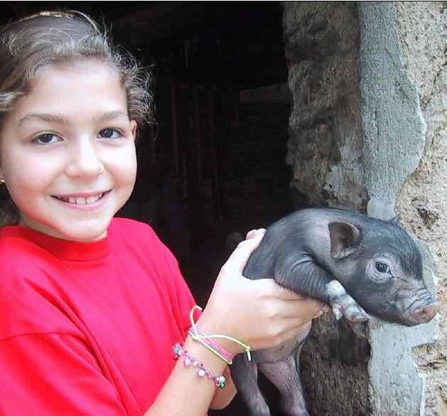 可爱 宠物猪/切西拉当初的个头还很小很小...
