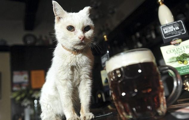 壁纸 动物 狗 狗狗 猫 猫咪 小猫 桌面 634_403