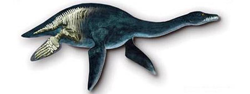 这种史前海洋动物的体长可达15米,撕咬力惊人