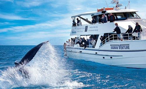 昆士兰与鲸同舞 观赏海上音乐娱乐秀[1]
