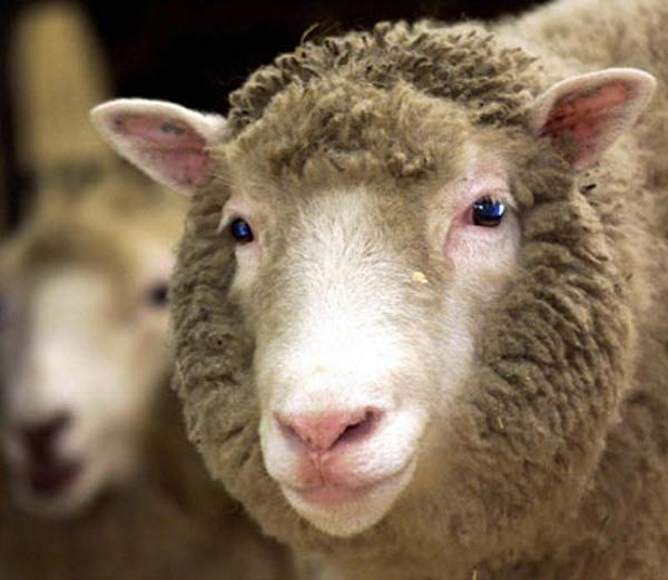 羊的关节结构图及作用