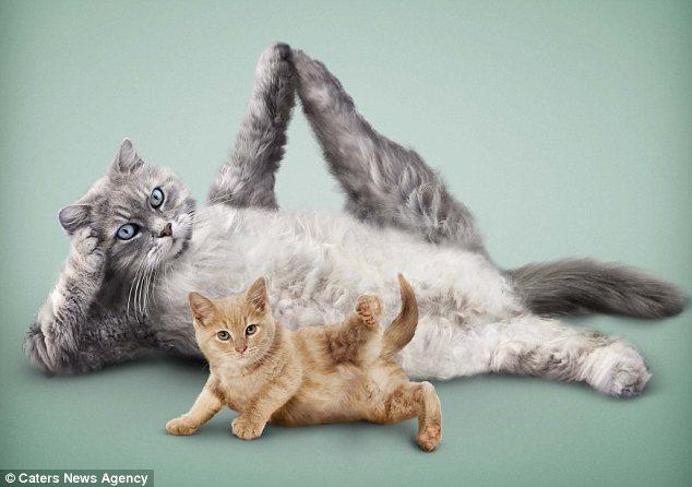 组图:小动物练瑜伽 一丝不苟令人捧腹