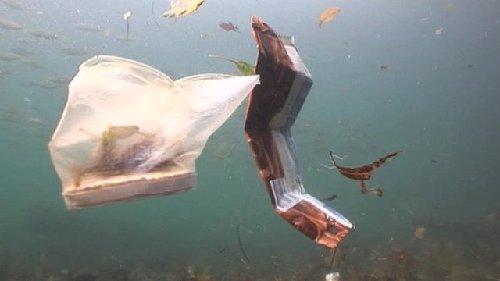 """图:悉尼港海底覆盖""""垃圾地毯"""" 累积200年清理难"""