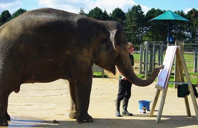 壁纸 大象 动物 634_410