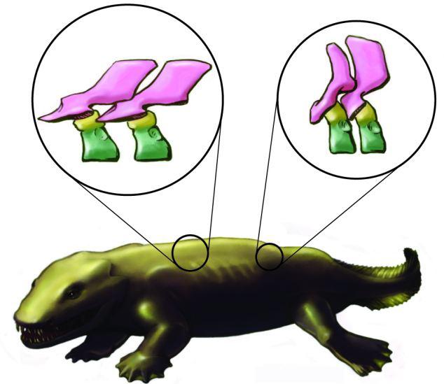 3d图像揭秘古老脊椎动物骨架结构 或颠覆传统理论