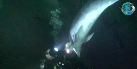 搁浅海豚被抱回大海